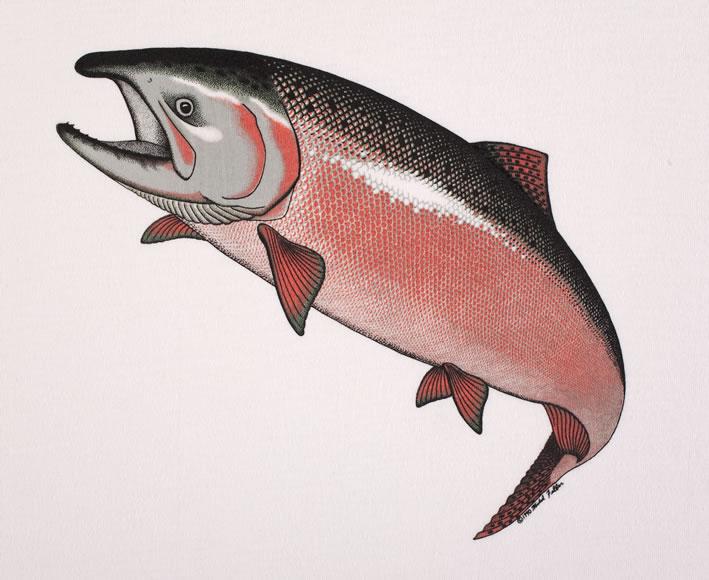 salmon-580